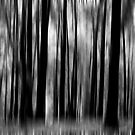 Bushfire aftermath abstract in monochrome by Sheila  Smart