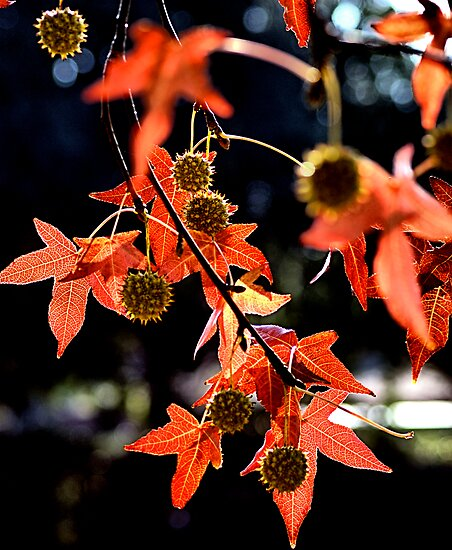 Orange Leaves and Dingleballs by Bob Wall