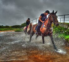 Water Horses HDR  by Rob Hawkins