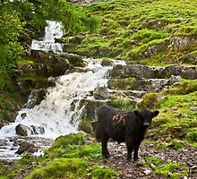 By the Waterfall by Trevor Kersley