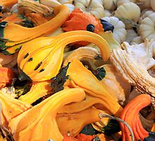 Autumn Winged Gourds and Moonshine Pumpkins by Renee D. Miranda