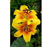 Golden Lilies .. In The Rain Photographic Print