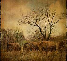 drapé dans les ors de l'automne... by dawne polis