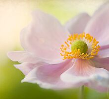 Autumn Anemone by Jacky Parker