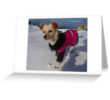 Dress warmly, the weather is cold Greeting Card