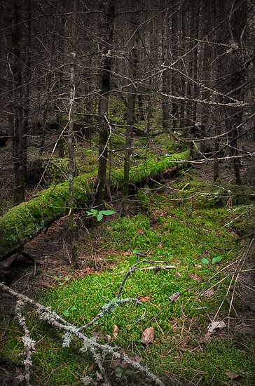 Moss on log by Aaron Bottjen