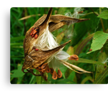 Once upon a Milkweed... Milkweed whimsy Canvas Print