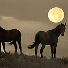 Moon Light Horses by Judy Grant