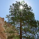 Tree shades the intense sun at Tent Rocks by JBoyer