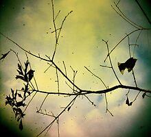 songbird by leapdaybride