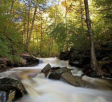 Fall Rush by Tim Devine