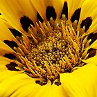 Yello Daisy Macros by Snopaw