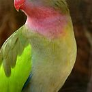 Do you like my Pastel Outfit! - Princess Parrot - NZ - Southland by AndreaEL