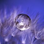 Droplet by Daniel Spruce
