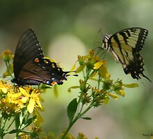 Two Butterflies by Terry Aldhizer