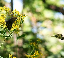 Swallowtail Butterfly In Flight With Butterfly In Waiting by Terry Aldhizer