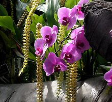 Lavender Orchids by Don Wright