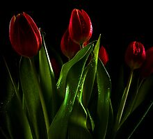 Red tulips and wet green leaves by Martyn Franklin