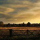 the fence by brett watson
