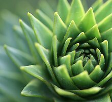 Monkey puzzle by cherryamber