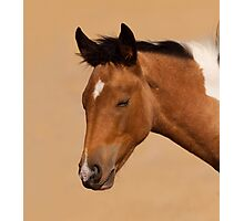 Sleeping Filly Photographic Print