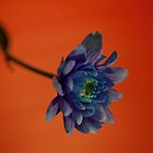 Blue on Orange by John Murray