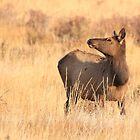 Elk Sun by J. L. Gould