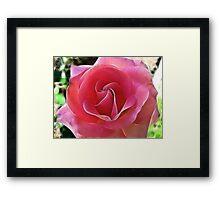The Breast Cancer Rose Framed Print
