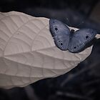 Blue by Craig Hender