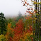 Misty Mountain Foliage by Judith Hayes