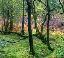 The Encircling Wood by VoluntaryRanger