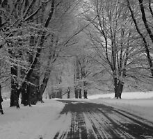 Tree-Lined in Winter by Karen Checca
