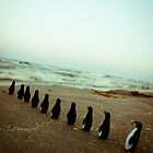 Penguin march by Iuliana Evdochim
