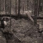 Crooked Root by Aaron Bottjen