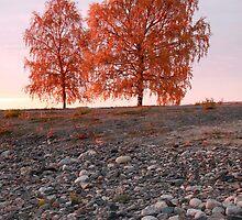 Firetrees by MistyIslet