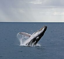 A Whale of a Time... by Carl Goulding