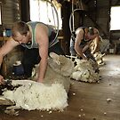 Shearing, Tooborac, Victoria, Australia by Michael Boniwell