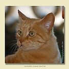 Marmaduke the Marmalade Cat  by Odille Esmonde-Morgan