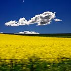 Canola and Clouds by Rob Beckett
