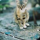 kitten by mtkang