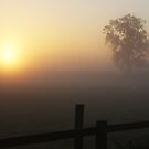 Golden Fog by nathanw08