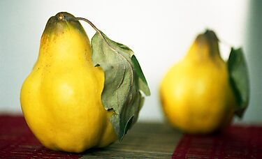 A Pear Of Quince by rorycobbe