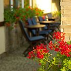 Red flowers and cofee tables by Dfilyagin