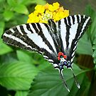 swallowtail  butterfly by Linda Makiej