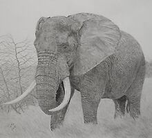 African elephant by Istvan froghunter