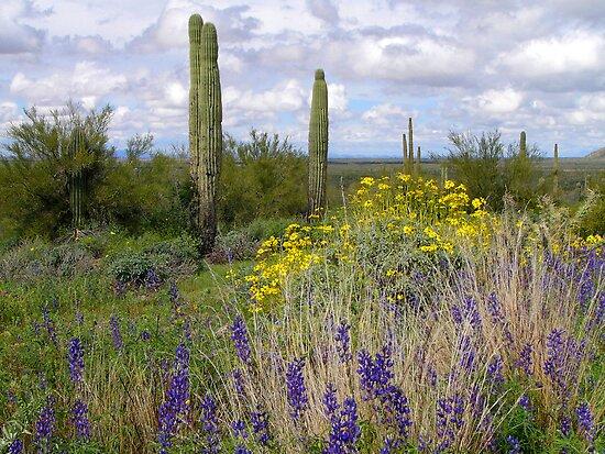 Picacho Peak Wildflowers by Lucinda Walter