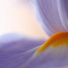 softness by Iris Mackenzie
