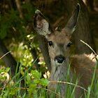 Bambi by Kerri Gallagher