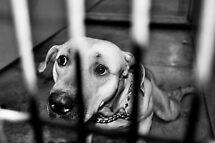 Paralyzed by Fear by SamTheCowdog