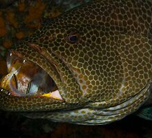 Grouper Cleaning Station by Todd Krebs